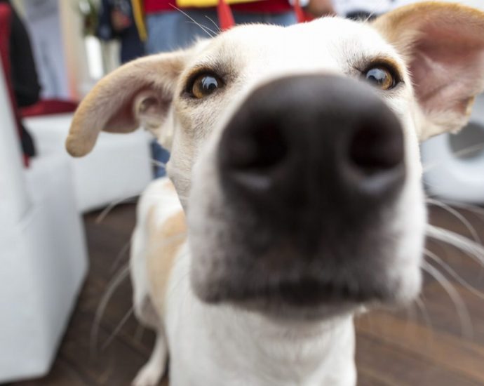 Hot Review of the Best Dog Camera - Post Thumbnail